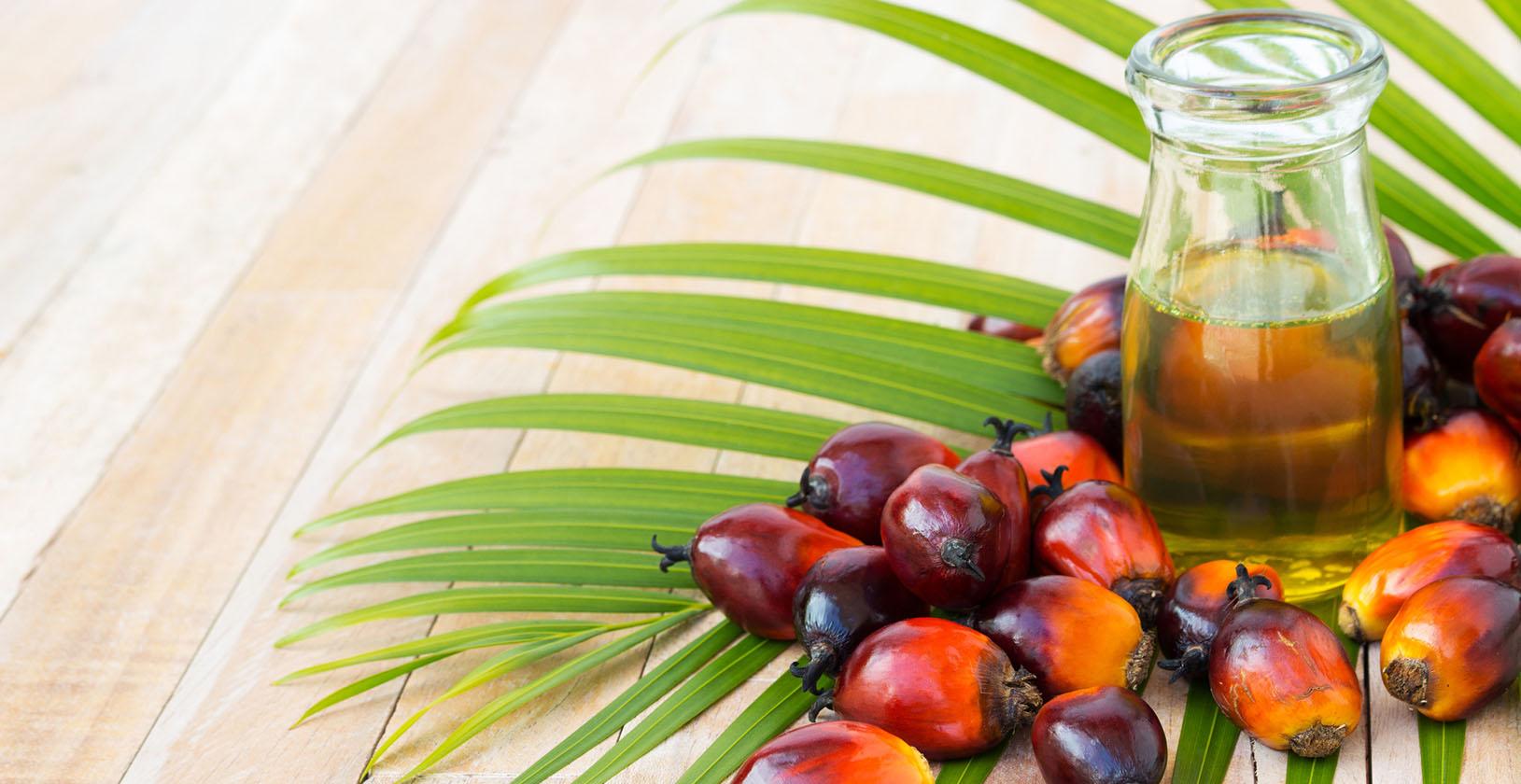 Картинки по запросу фото пальмова олія