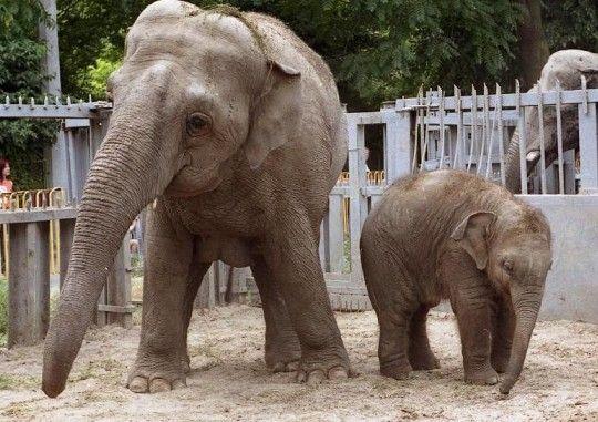Українські зоопарки відвідання яких