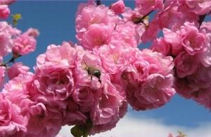 Фестивальний квітень в україні що де